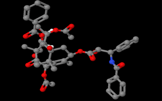 Paclitaxel紫杉醇稳定微管蛋白聚合,抑制细胞有丝分裂